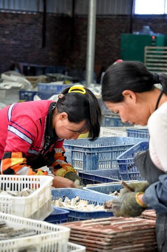 Cina: assemblaggio del mosaico